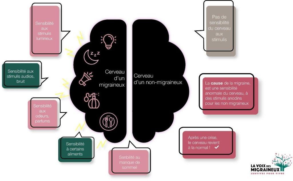 schéma des différences entre le cerveau d'un migraineux et d'un non migraineux
